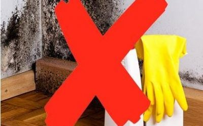 5 Reasons Why You Shouldn't Attempt Mold Abatement Yourself
