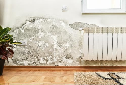 How Mold Can Affect Your Health