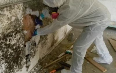 What You Need to Know Before Hiring Professionals for Mold Restoration