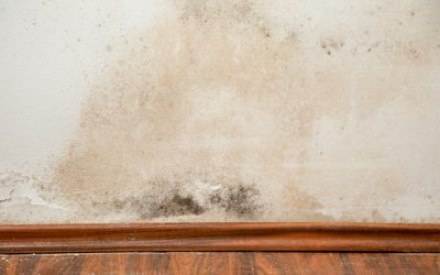 Mold vs Mildew: What's the Difference?