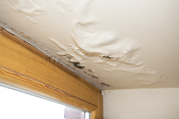 Signs of Mold and Water Damage