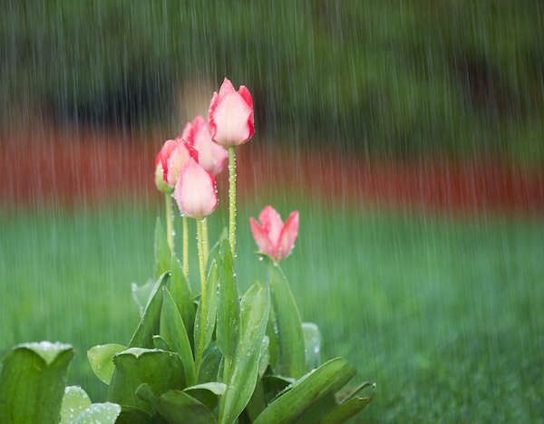April Showers Bring May Flowers: How to Prepare for the Rainy Season
