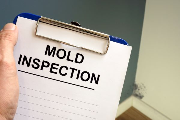 FAQs About Mold Remediation