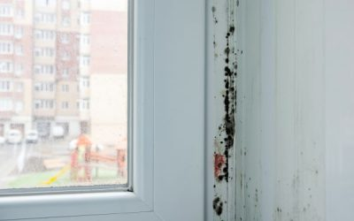 Things That Happen When Mold is Left Untreated